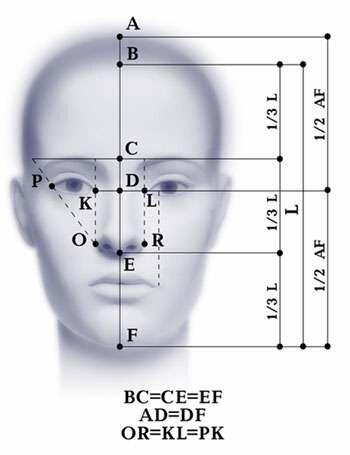 Идеальные пропорции лица давно
